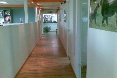 """250 מ""""ר משרדים בהר חוצבים בבניין הכי יפה"""